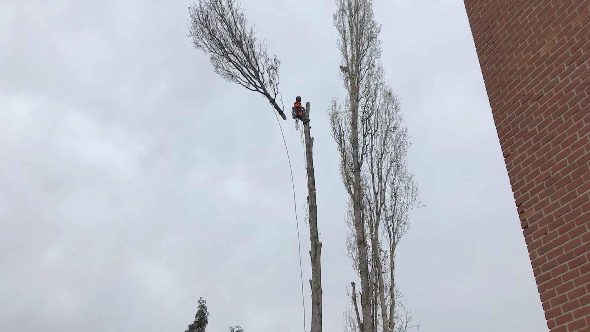 abattage-arbre-herstal-5_o