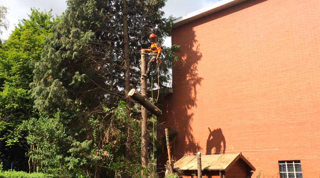 demontage-arbre-chenee-grivegnee-4_o