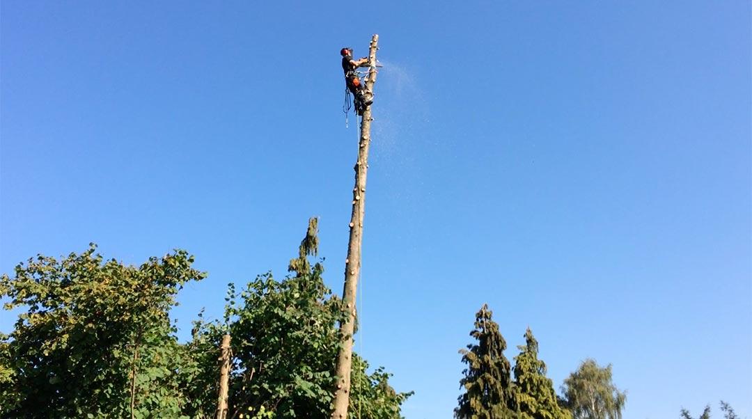 demontage-arbre-huy-waremme-8_o