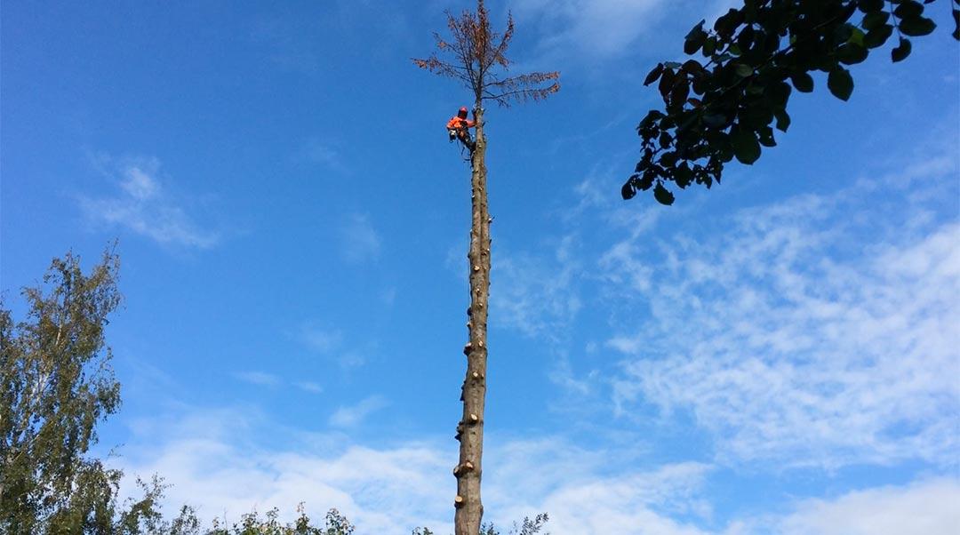 demontage-arbre-liege-12_o