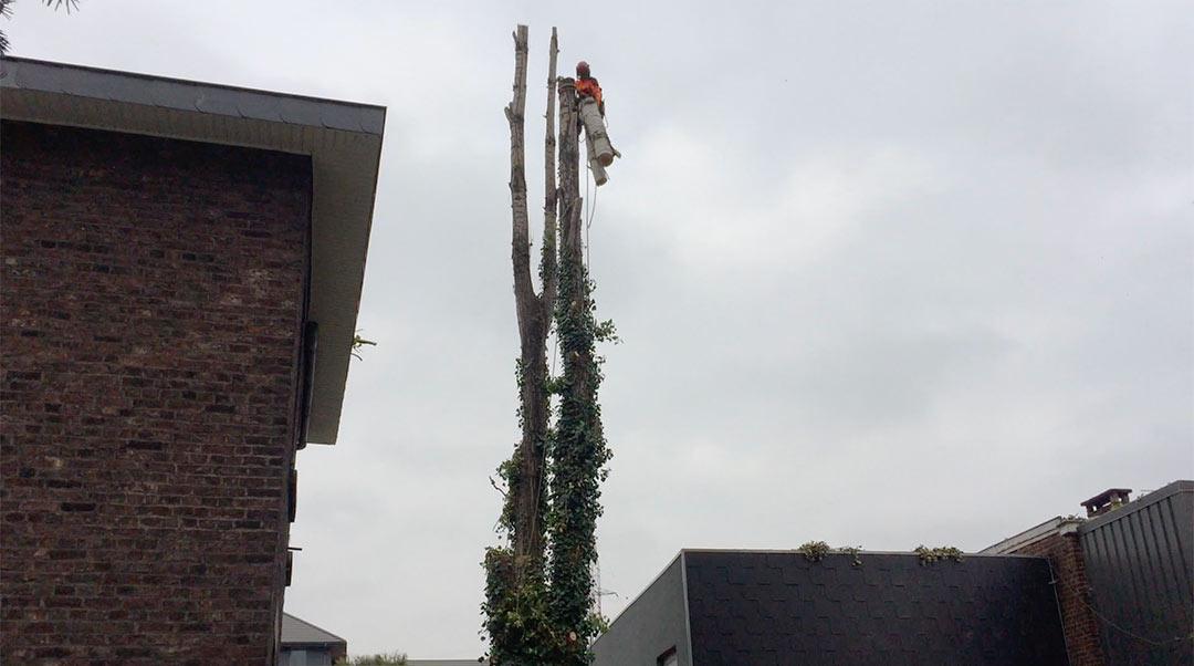 demontage-arbre-wallonie-6_o